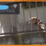 【感動】天国へ旅立った愛犬と思いもかけない再会に涙…【世界が感動!涙と感動エピソード】
