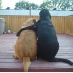 「絶対笑う」最高におもしろ犬,猫,動物のハプニング, 失敗画像集# #16