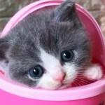「かわいい猫」 笑わないようにしようとしてください – 最も面白い猫の映画 #340