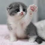 「猫かわいい」 すごくかわいい子猫 – 最も面白い猫の映画 #252