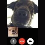 「おもしろ犬」思わずに笑っちゃうかわいい犬たちのハプニング, 失敗動画集