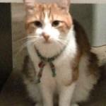 猫の掛け時計を発見したあーにゃんの反応が面白い!
