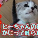 子猫 かわいい反省⁉︎とーちゃんの錠剤かじって叱られた!むぎkitten