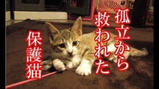 かわいい子猫が突然お家にやってきた-その時、先住猫達は・・・?!5週間目7-kitten came to our house 37