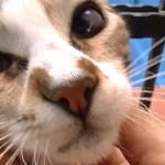 猫と一緒にお散歩 可愛い子猫の姉妹猫と再会する ♯2