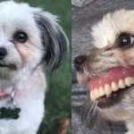 昼寝から目覚めたら、飼い犬がスゴイ笑顔になっていた。