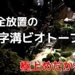 完全放置の「U字溝ビオトープ」で凄いメダカ発見!