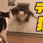 【おかしい猫】ドアから抜けられなくなった猫がおもしろい – the cat blunders with door【Video Pizza】