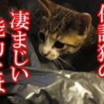かわいい子猫が突然お家にやってきた-その時、先住猫達は・・・?!6週間目2-kitten came to our house 39