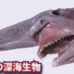 超個性的!驚きの外見と生態を持つ謎の深海生物5選!