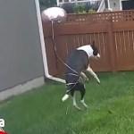 【面白い動画】  かわいい犬 – 世界の面白いペットの動画 #04【Video Pizza】