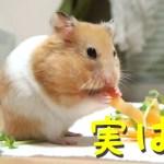 【ハムスター】人参を食べると見せかけて実は…?おもしろ可愛い癒しA hamster pretending to eat carrots
