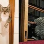 パンチで障子を破る猫ちゃんが可愛くてじわじわ面白いw~A cat that breaks a shoji with a punch is cute and funny.