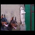 「絶対笑う」最高におもしろ犬,猫,動物のハプニング, 失敗画像集 #363