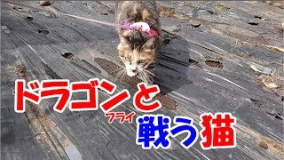 猫のとんぼ-かわいい猫なのに犬として育てられた猫53