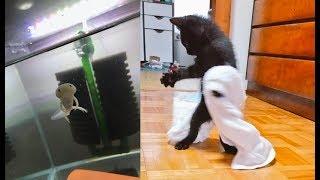 動物&生物の素晴らしい瞬間がじわじわと笑えて、面白いw~A wonderful moment of animals & living things is interesting.