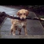 「絶対笑う」最高におもしろ犬,猫,動物のハプニング, 失敗画像集 #372