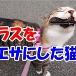 猫がカラスから奪い取った戦利品とは?!-かわいい猫なのに犬として育てられた猫52