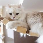 運動神経のいい猫も飼主の「くしゃみ」には驚きを隠せなかった!?