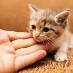「猫かわいい」 すごくかわいい子猫 – 最も面白い猫の映画 #268