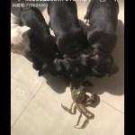 「面白い動物」あり得ないことをする犬, 猫・おもしろ犬, 猫のハプニング, 失敗集 #11