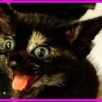 【感動】声を失った迷子の子猫…安心できる家とたくさんの愛情で再び声を取り戻す!【世界が感動!涙と感動エピソード】