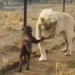 「面白い動物」あり得ないことをする犬, 猫・おもしろ犬, 猫のハプニング, 失敗集 #53
