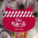 こんなに可愛いからって…CM無断転載禁止ニャよ!真剣な猫!-TV Commercial With My Cat