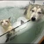 「面白い動物」あり得ないことをする犬, 猫・おもしろ犬, 猫のハプニング, 失敗集 #37