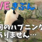 【LIVEきぶん】なんのハプニングもありません・・・【AWS】今週のパンダ「結浜・桃浜」2018/11/10 inアドベンチャーワールド