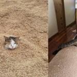 何かおかしい。じわじわ面白い猫ちゃんの姿が和むw~Something is wrong. The funny cat 's figure gets relaxed.