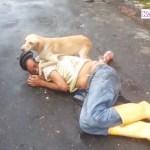 「感動犬」倒れた飼い主を必死で守る犬・救急車で運ばれるご主人を追いかける犬!