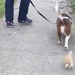 【感動】犬の散歩中、なぜか一生懸命ついてきた子猫を保護。自分で幸せを掴んだ子猫は1年後・・【世界が感動!涙と感動エピソード】