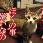 かわいい子猫が突然お家にやってきた-その時、先住猫達は・・・?!8週間目5-kitten came to our house 56
