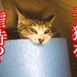 かわいい子猫が突然お家にやってきた-その時、先住猫達は・・・?!7週間目5-kitten came to our house 49