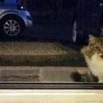 【感動】「お家に入れて・・」野良猫が玄関の前でずっと、入れてと訴えていた理由がなんと!【世界が感動!涙と感動エピソード】