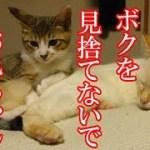 かわいい子猫が突然お家にやってきた-その時、先住猫達は・・・?!8週間目6-kitten came to our house 57