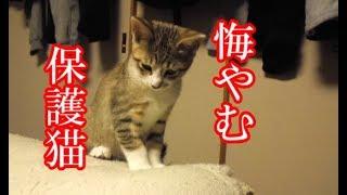 かわいい子猫が突然お家にやってきた-その時、先住猫達は・・・?!8週間目2-kitten came to our house 53