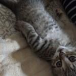 【キジトラ子猫】生後一か月と現在の可愛い寝姿🐾— Kitten sleeping face—
