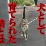 犬っぽい猫とは?!-かわいい猫なのに犬として育てられた猫56