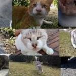 感動猫動画のライブストリーム
