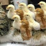 おかしい猫 – かわいい猫 – おもしろ猫動画 HD #263
