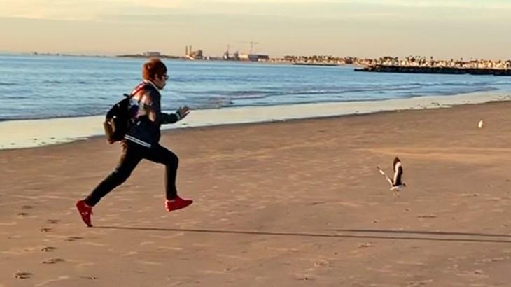 ロスのビーチの夕日に感動しカモメを全力で追いかける心の透き通った少年