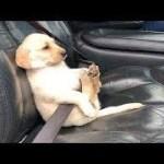 「面白い動物」あり得ないことをする犬, 猫・おもしろ犬, 猫のハプニング, 失敗集 #141
