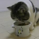 ご飯をこぼします。【猫】【かわいい】