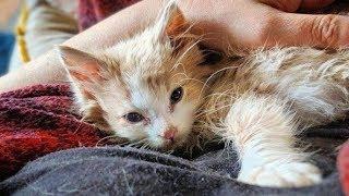 【感動実話】瀕死の状態で保護され、朝を迎えられるか分からなかった子猫。優しい女性に一晩中抱きしめられ、ついに元気を取り戻す