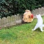「面白い動物」あり得ないことをする犬, 猫・おもしろ犬, 猫のハプニング, 失敗集 #116
