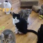 猫もびっくり❗私もびっくり‼️