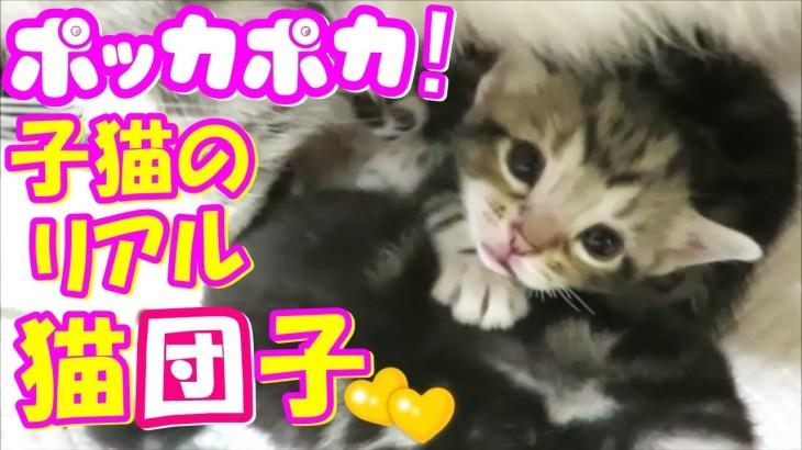 リアルでみて!子猫のかわいい猫団子ww❤(^^♪Animation of my cute kittens.