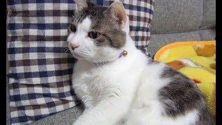 【猫はそこにいるだけで可愛い 】Cats are cute just by staying there.